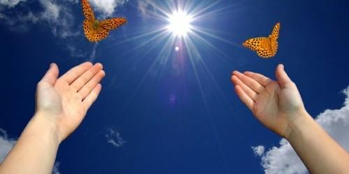 butterfliesinskiy