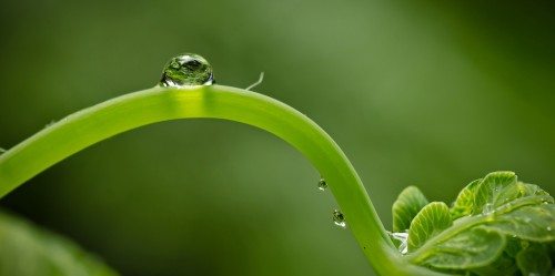 waterdrops_plant
