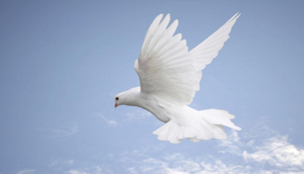 dove_sky_wide