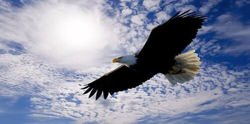 soaring_eagle