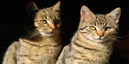 twincatshadow