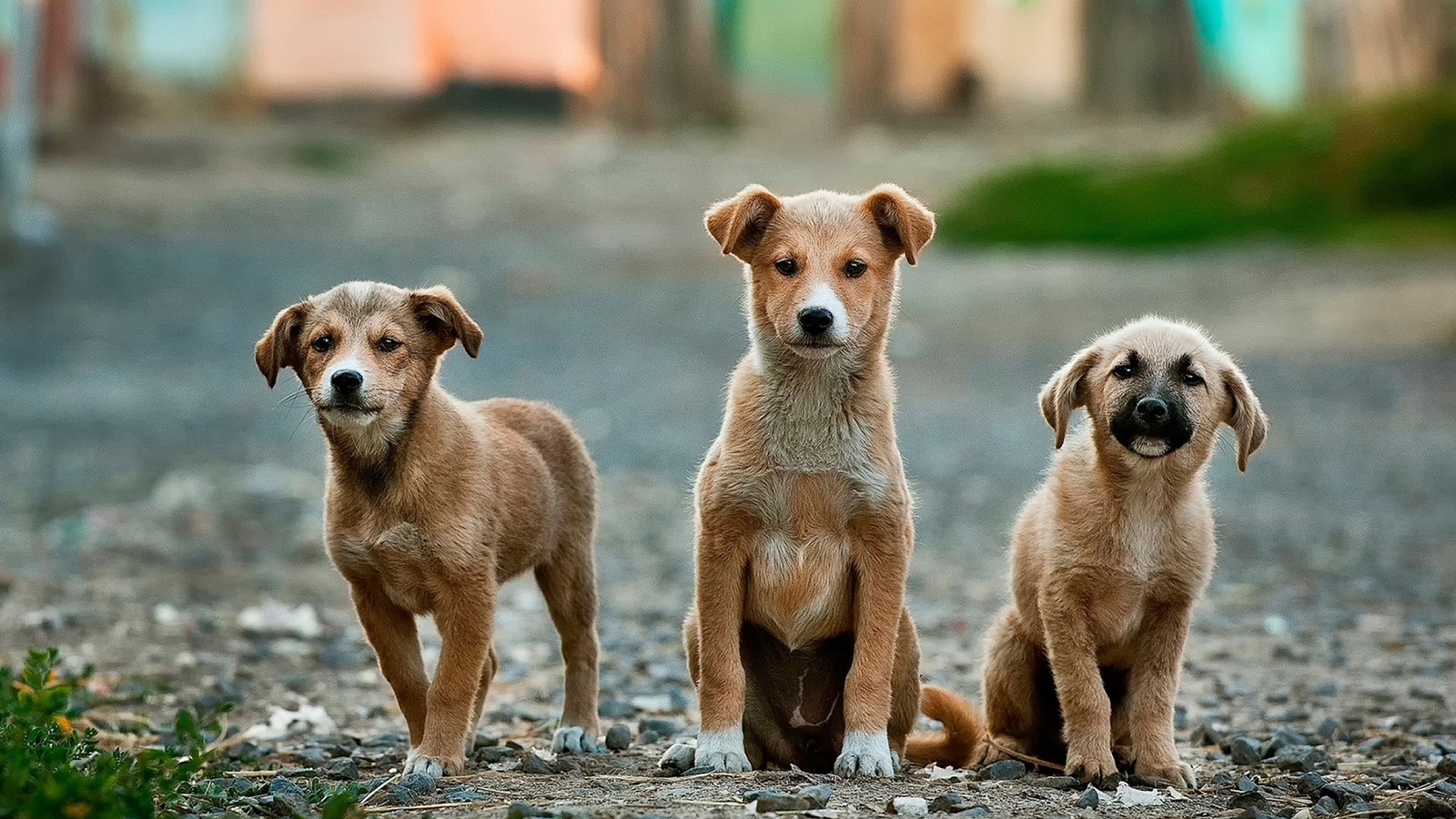 Animal Reincarnation |Your Pet May Be On Their Way Back to You!